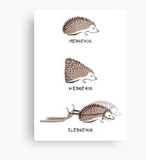 Hedgehogs and their relatives Metal Print