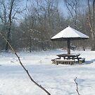 Under snow.... by Ana Belaj