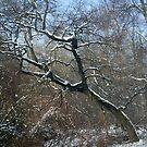 Wood under a white lace... by Ana Belaj