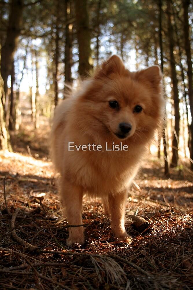 Gracie Mae by Evette Lisle