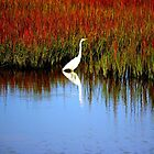 Egret Looking For Lizards by Cynthia48