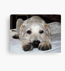 Brannoc Big Paws Canvas Print