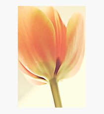 Ode to spring Photographic Print