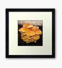 Golden Joy Framed Print