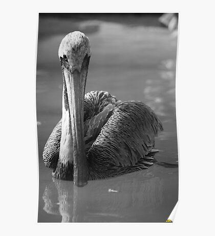 Grey Pelican B&W Poster