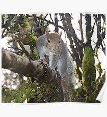 Squirrel In Our Apple Tree Poster