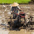 Bali Rice Farmer by Bobby McLeod