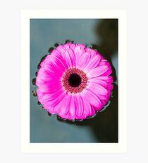 Flower on a Still Pond Art Print