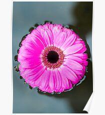 Flower on a Still Pond Poster