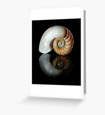Shell Symmetry Greeting Card