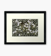 Clusters of Flowers in the Bush Framed Print