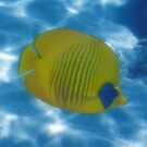 The Bluecheeked Butterflyfish Photoart by hurmerinta