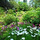 Wildflowers in the Woods by Sandra Fortier