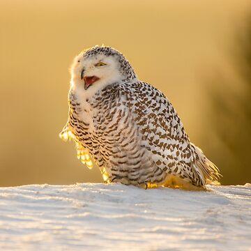 Snowy Owl by Femaleform