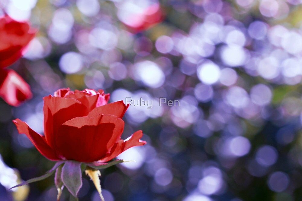 It is the time you have spent on your rose that makes your rose so important. by Ruby  Pen