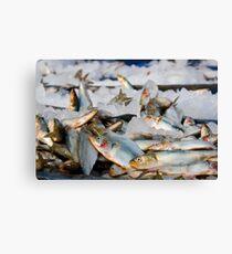 Fish Fish Fish!! : Freezing here Canvas Print