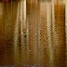 Autumn Birch by Lynn Wiles