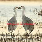 Valentine's Day Cranes by eyes4nature