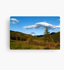 Wild coniferous  Canvas Print