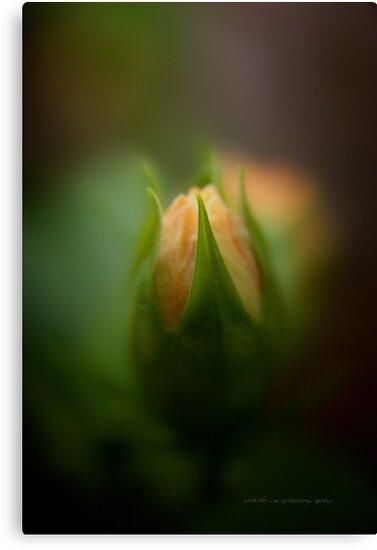 Bud Seeking Heaven © by Vicki Ferrari