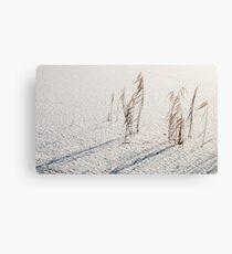 Winter reeds Canvas Print
