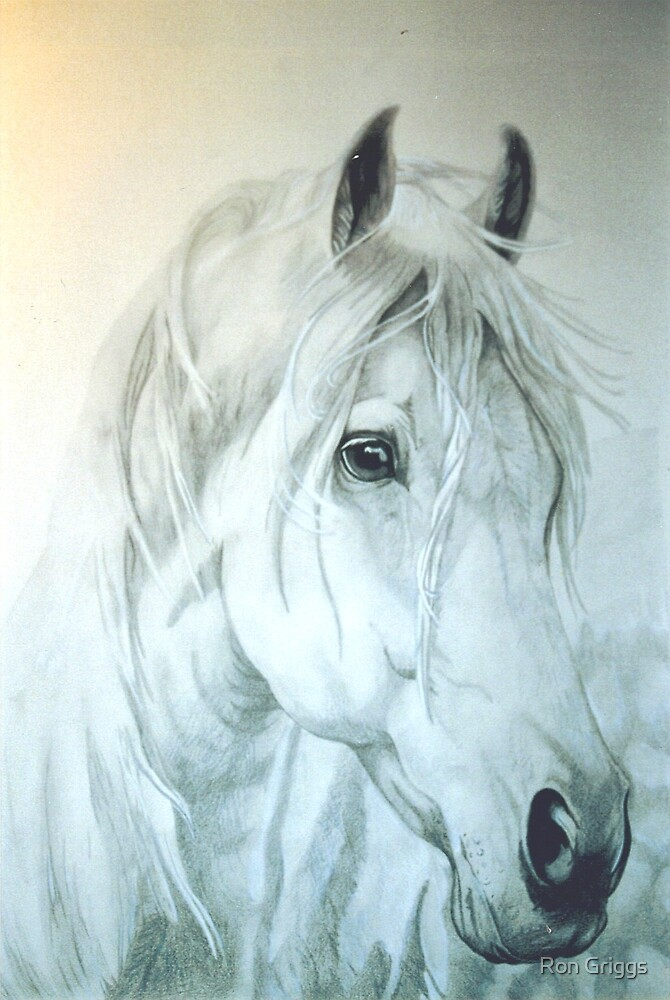 Max- Arabian Horse by Ron Griggs