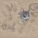 Brush Tailed Possum by SnakeArtist