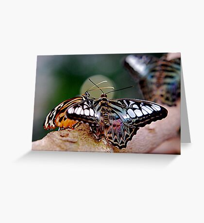 Butterfly Gossip Greeting Card