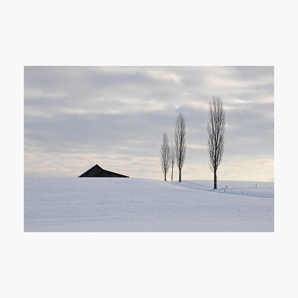 Three'n half Trees Photographic Print
