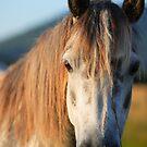 Horse Highlights by EUNAN SWEENEY
