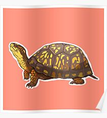 Turtle Poster