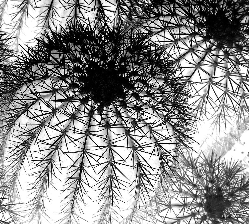 Three Cactus # 3 by David Schroeder