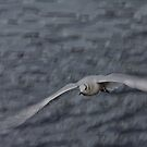 In Flight by jskouros