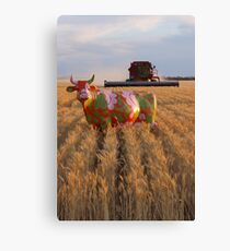 Painted Cow in the Wheat Canvas Print
