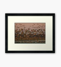 Sand Hill Cranes at Dawn Framed Print