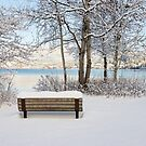 Snowy Bench by Tracy Riddell