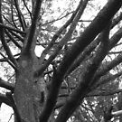 Tree branches by Sherry Freeman