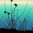 Coastal plants by chihuahuashower