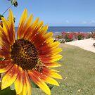 Sunflower Tanna Island Vanuatu by frenzix