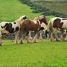 Piebald  Horses.Donegal .Ireland by EUNAN SWEENEY
