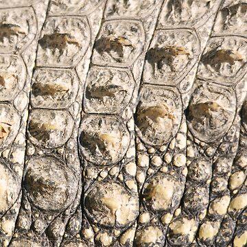 Alligator Scales by 4Craig