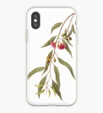 Eucalyptus leucoxylon - Yellow Box with Red Flowers iPhone-Hülle & Cover