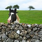 Horse and wall. Ireland by EUNAN SWEENEY