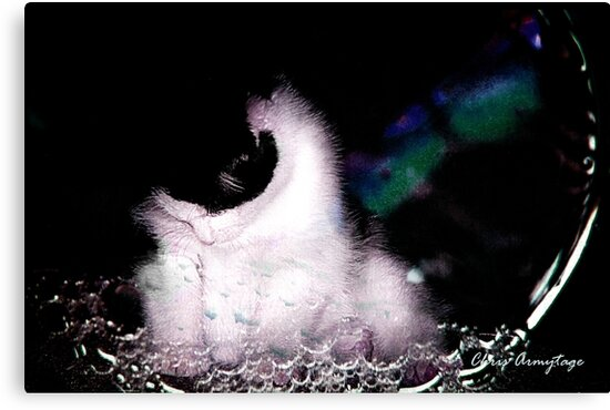 Kitten in a bubble by Chris Armytage™