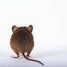 Shy  Mouse by EUNAN SWEENEY