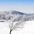 ~ Winter Wonderland ~ by Bobby Strange