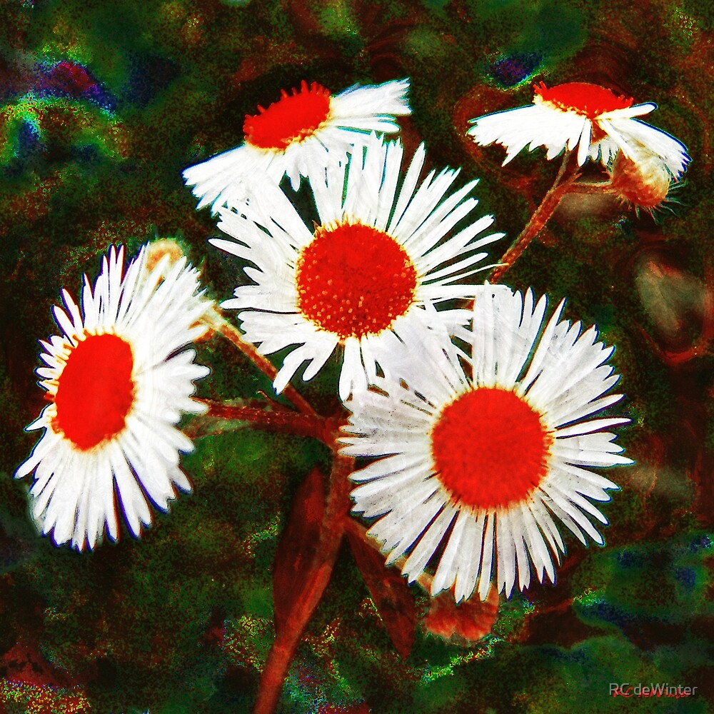 Aster-Oids by RC deWinter