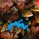 Fish in an underhang by muzy