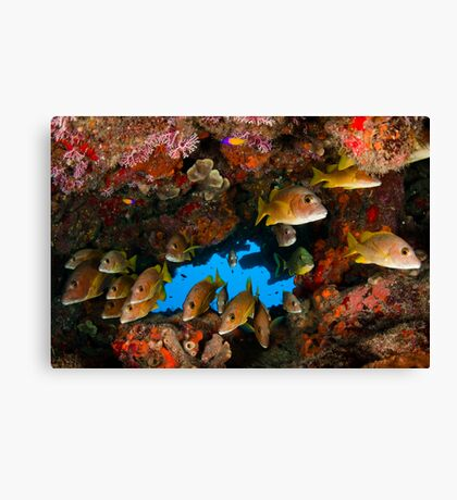 Fish in an underhang Canvas Print