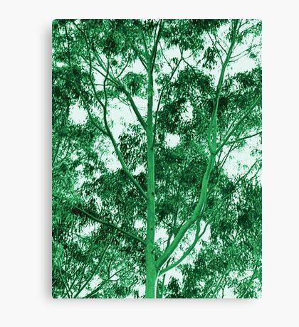 Eucalyptus Tree photo painting Canvas Print